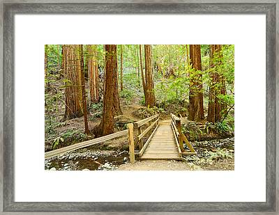 Redwood Forest Of Muir Woods National Monument. Framed Print by Jamie Pham