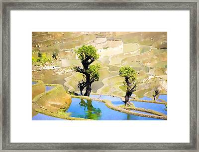 Rice Terraces Of Yuanyang Framed Print by Lanjee Chee