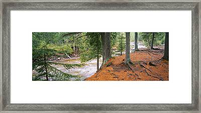 River Flowing Through A Forest Framed Print by Panoramic Images