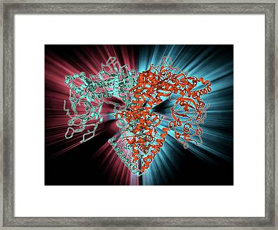 Rna-dependent Rna Polymerase Molecule Framed Print by Laguna Design