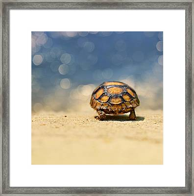 Road Warrior Framed Print by Laura Fasulo