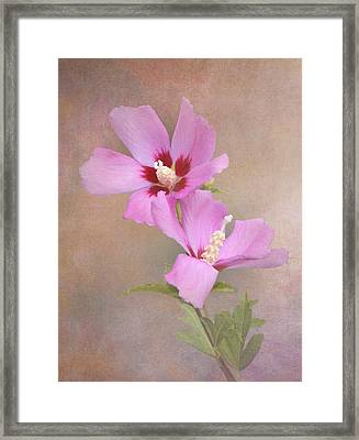 Rose Of Sharon Framed Print by Angie Vogel