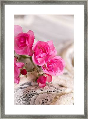 Roses And Lace Framed Print by Edward Fielding