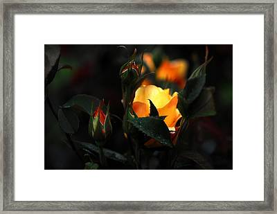 Roses Framed Print by Jean-Jacques Thebault
