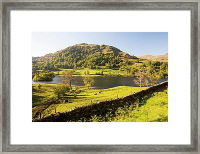 Rydal Water In Spring Framed Print by Ashley Cooper