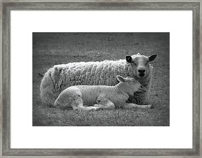 Safe Framed Print by Kathy Bassett