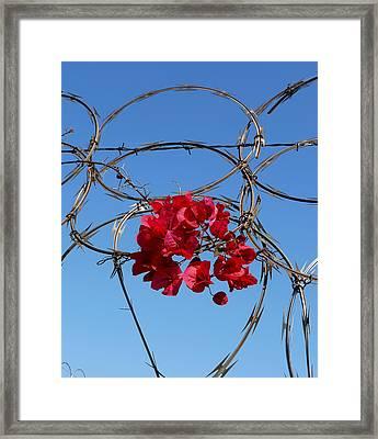 Santa Barbara  Framed Print by Gia Marie Houck