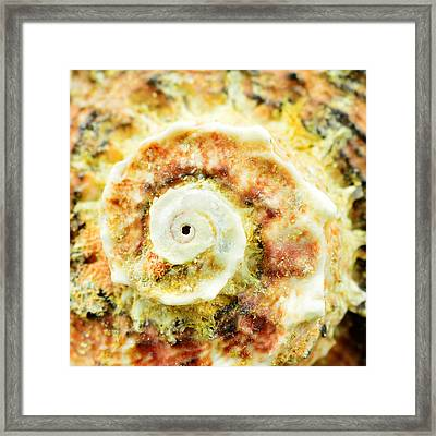 Sea Shell In Closeup Framed Print by Toppart Sweden