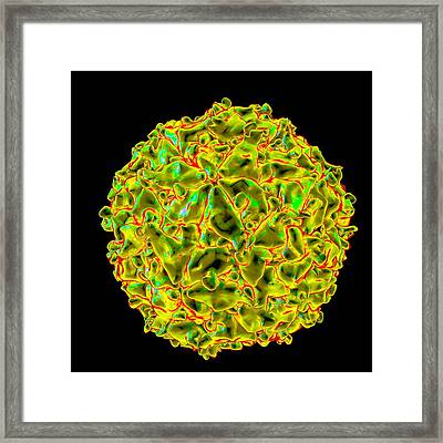 Seneca Valley Virus Framed Print by Mehau Kulyk