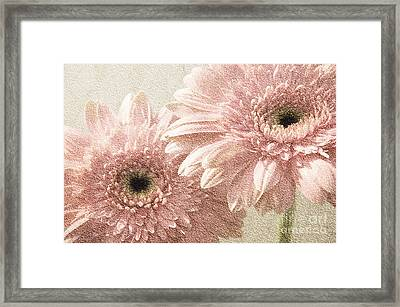 2 Silver Pink Painterly Gerber Daisies Framed Print by Andee Design