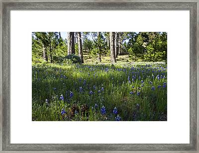 Simple Pleasures Framed Print by Lynn Bauer