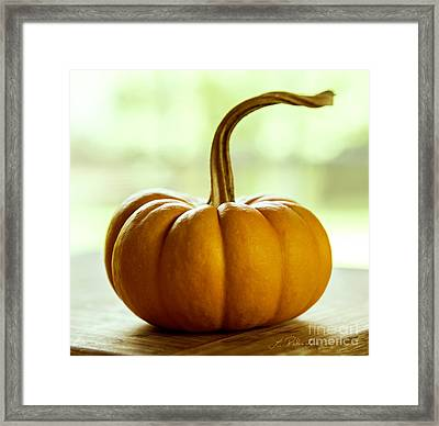 Small Orange Pumpkin Framed Print by Iris Richardson