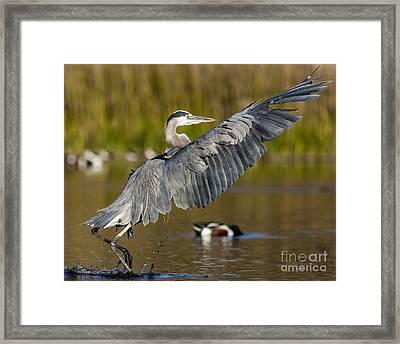 Smooth Landing Framed Print by Carl Jackson