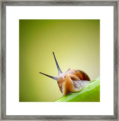 Snail On Green Stem Framed Print by Johan Swanepoel