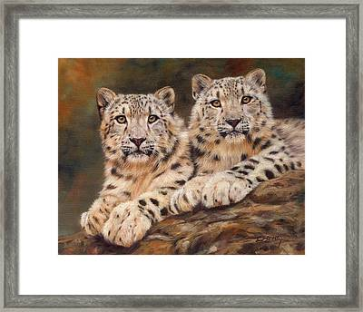 Snow Leopards Framed Print by David Stribbling