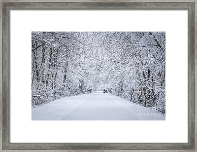 Snowy Path Framed Print by Dawn M Smith