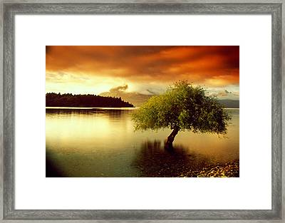 South Island New Zealand Framed Print by Panoramic Images