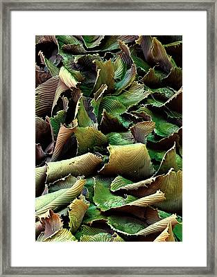 Spanish Moss Leaves Framed Print by Stefan Diller