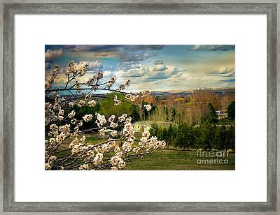 Spring Time Framed Print by Robert Bales