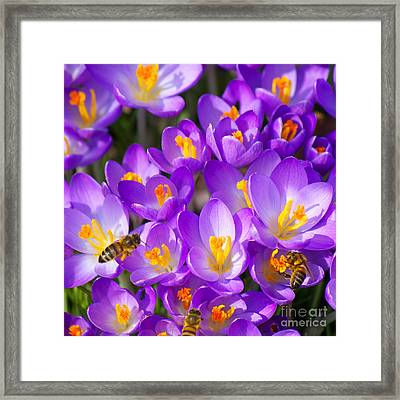 Springtime Framed Print by Angela Doelling AD DESIGN Photo and PhotoArt