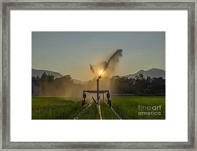 Sprinkler Irrigation Framed Print by Mats Silvan