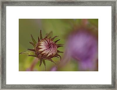 Stands Alone Framed Print by Kathy Peltomaa Lewis