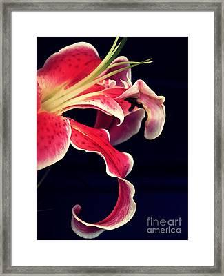 Star Gazer Lily Framed Print by Sarah Loft