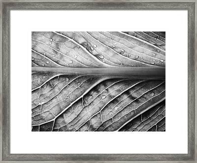 Streamlined Framed Print by Tom Druin