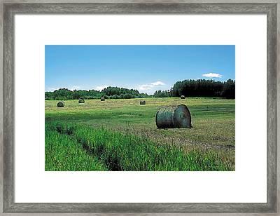 Summer Hay 3 Framed Print by Terry Reynoldson