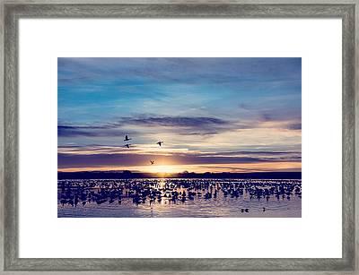 Sunrise - Snow Geese - Birds Framed Print by SharaLee Art