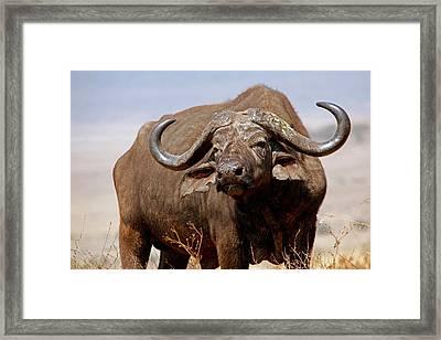Tanzania, Ngorongoro Crater Framed Print by Kymri Wilt