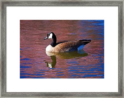 That Touch Of Pink Framed Print by Donna Kennedy