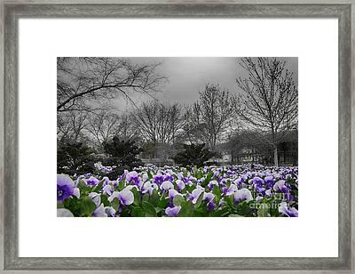 The Color Purple Framed Print by Douglas Barnard