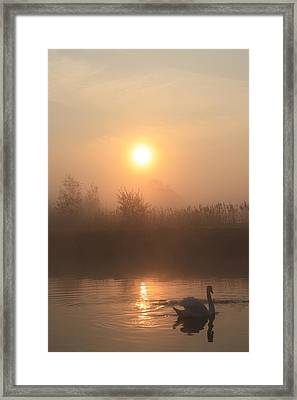 The Peace Of Dawn Framed Print by Linsey Williams