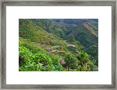 The Rice Terraces Of The Philippine Framed Print by Keren Su