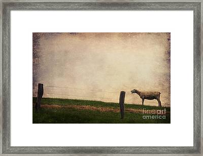 The Sheep Framed Print by Angela Doelling AD DESIGN Photo and PhotoArt