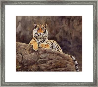 Tiger Framed Print by David Stribbling