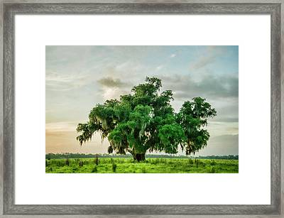 Tree Of Life Framed Print by Alicia Morales