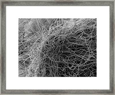 Trichophyton Fungus Framed Print by Thierry Berrod, Mona Lisa Production