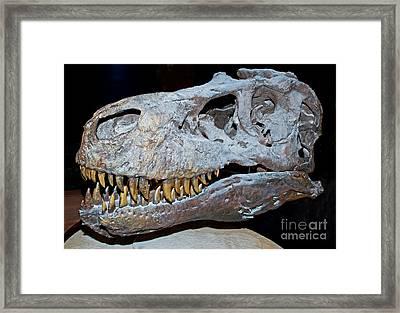 Tyrannosaurus Rex Skeleton Framed Print by Millard H. Sharp