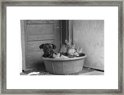 Unlikely Friends Framed Print by Amber Kresge