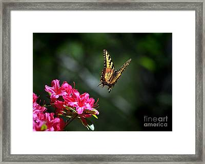 Up And Away Framed Print by Nava Thompson
