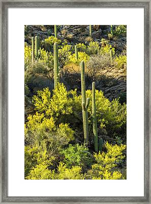 Usa, Arizona, Coronado National Forest Framed Print by Jaynes Gallery