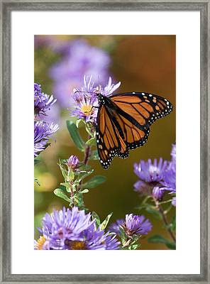 Usa, New Hampshire Framed Print by Jaynes Gallery