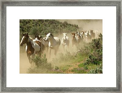 Usa, Washington, Malaga, Running Horses Framed Print by Jaynes Gallery