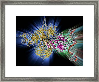 Uv-damaged Dna-binding Protein And Dna Framed Print by Laguna Design