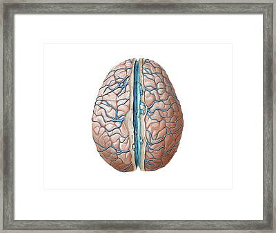 Venous System Of The Brain Framed Print by Asklepios Medical Atlas