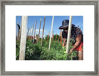 Volunteers In A Community Garden Framed Print by Jim West