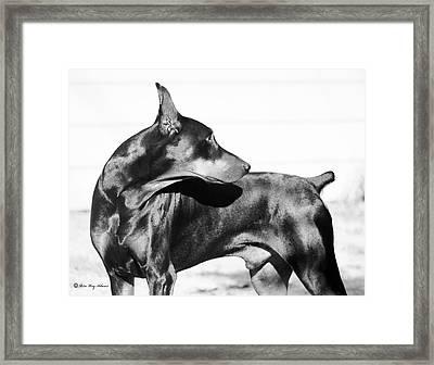 Watchful Framed Print by Rita Kay Adams