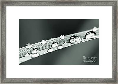 Water Drops On Grass Blade Framed Print by Elena Elisseeva